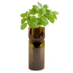 GROWBOTTLE  $35.00-Cultivate your indoor green thumb with a hydrogarden sprouting from a re-purposed wine bottle. The ideal environment for hydroponic herb-growing, allowing sunshine to permeate throughout, each set comes ready to use with clay pebbles, wool wick, plant nutrient, cork coaster, and seeds. Choose between Organic Basil, Organic Chive, Heirloom Mint, Organic Oregano, or Organic Parsley.