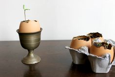 Sprouting Seedlings in Eggshells on Food52: http://f52.co/1gBavzH. #Food52