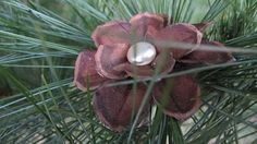 Pinecone Flower