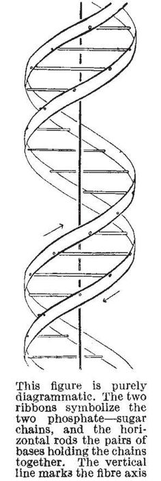 Today is #DNAday a holiday celebrated on April 25 which is the day in 1953 when James Watson and Francis Crick published papers in Nature on the structure of DNA.  Credit: Nature Publishing Group