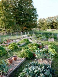 country veg garden
