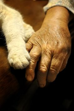 kitty cats, anim, miyoko ihara, white cats, beauti, kitti, dog, furry friends, holding hands