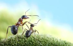 Ant photography by Andrey Pavlov. They are real ants, just being ants.