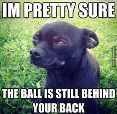Playing fetch with a skeptical dog