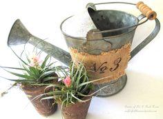 Terracotta pots ~ Ge