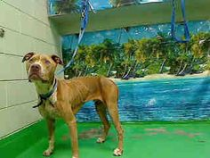 CALIFORNIA URGENT!!!!! RESCUES NEEDED!!! MORENO VALLEY, CA.... www.PetHarbor.com Animal Search: ADOPTABLE