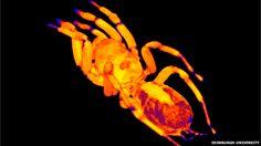MRI of a spider.