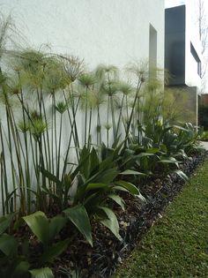 Altamira 68 . detalle jardin de entrada
