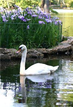 Swan Lake  Sumter, SC