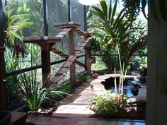 Walkways and perch spots along an edge of a catio. I also love the pond idea, our cats love to drink running water so this would be ideal with a little fountain.