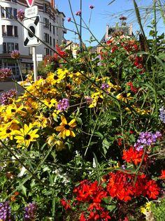 Roundabout flowerpot on Avenue Julien