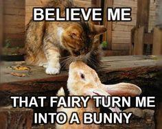 The Bunny LOVE.