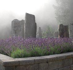 Lavender, fog & stone. #ChristinaDodd