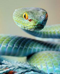 Beautiful Turquoise Snake