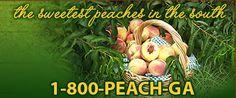 List of great recipes using peaches! #georgia #LibertyCo