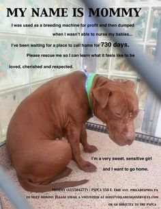 """Mommy was used as a breeding machine for profit and then dumped when she couldn't nurse her babies. Even worse, she was forced to call the PA SPCA in Philly home for  730 days in protective custody as """"evidence,"""" unavailable for foster or adoption. That's 2 years of her life in a kennel. She only needs one person to be her hero! Email: info@VoilaDesignServices.com She's truly a life worth saving! So pleasse adopt Mommy today!"""