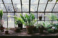 herb, pot bench, potting benches, winter garden, glass