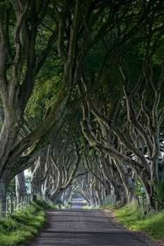 The Traditional view of the Dark Hedges by Andy Gibson on 500px