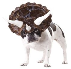 small dogs, halloween costumes, halloween dog costume, dog costumes, puppi, little dogs