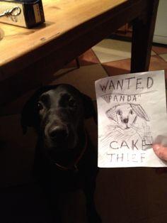 loll dog shaming
