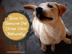 How to Remove Pet Urine Odor Naturally