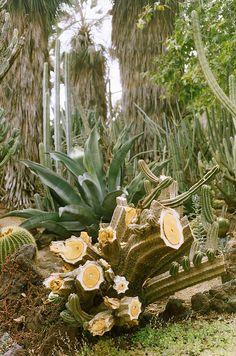 The Huntington Gardens ~ Los Angeles