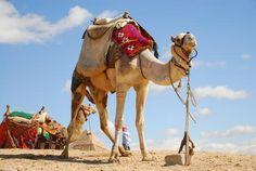 Hurghada hurghada, visit, space, place, egypt
