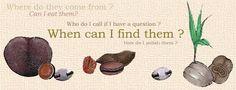 Sea-Bean information