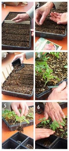 How to grow vigorous plants from seed at home