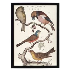 Natural History Birds from Z Gallerie