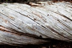 Form In Nature