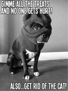 Boston Terrier robber