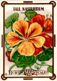 Vintage Seed Pack Label