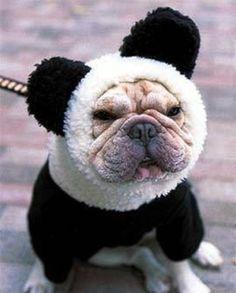 doggy panda.