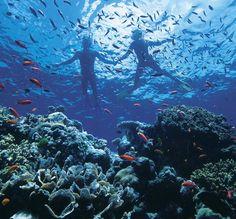Great Barrier Reef, Down Under