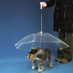 My Miniature Schnauzer, Harvey, is a really grumpy dog when it's raining outside. He's got a little doggie coat but I think this would make him much happier.