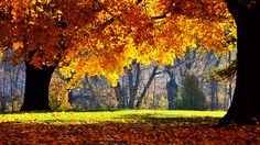 fall pictures n hd - Google Search