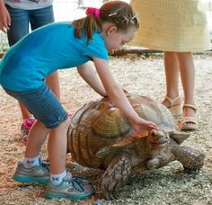 Rayna-Kay Bonnell, 5, of Colorado Springs, pets Memo, a 70-year-old African spur tortise, at the Lemur Land of Madagascar petting zoo Sunday at the Colorado State Fair. Photo by Mike Sweeney (Aug. 26, 2012)
