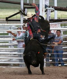 Bull Riding. Photo by Clint Gilchrist, Pinedale Online.
