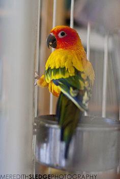 Rainbow bird.