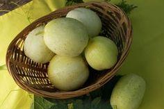 """Heirloom Lemon Cucumber "". Delicious!"