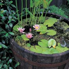 Whiskey barrel water garden.