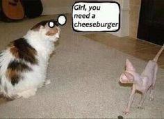 Girl you need a cheeseburger.