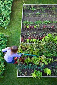 Grow Your Own Kitchen Garden