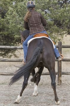 Teaching Your Horse to Sidepass with Top Horse Trainer Julie Goodnight