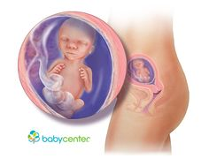 What your baby looks like at 17 weeks @babycenter