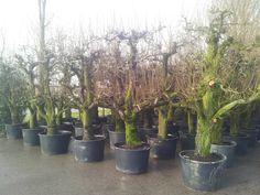 tuinide 2013, boomkwekerij gerrit, gerrit luiten, expos tuinide