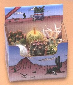 Cactus Only Planting Kit - This kit contains 6 cacti only in their plastic growing pots for use in making your own arrangements. Now you can own a piece of the American Southwest! Desert Canyon Gifts presents a selection of Cactus Growing Kits. Most cactus planting kits come complete with cacti, the right type of soil, decorative pebbles, planter, and a unique Arizona sign.  $21.95