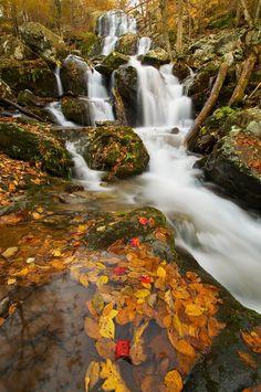 """Fall leaves at Dark Hollow Falls in Shenandoah National Park, Virginia."""
