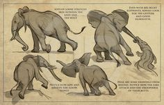 Elephant drawings | Tembo - How to draw elephants packet, The art of Aaron Blaise